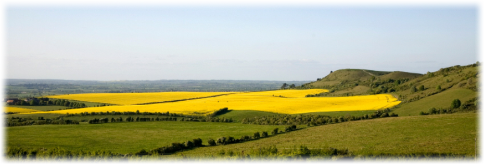 Yellow field in the Chiltern Hills near Garden KnowHow